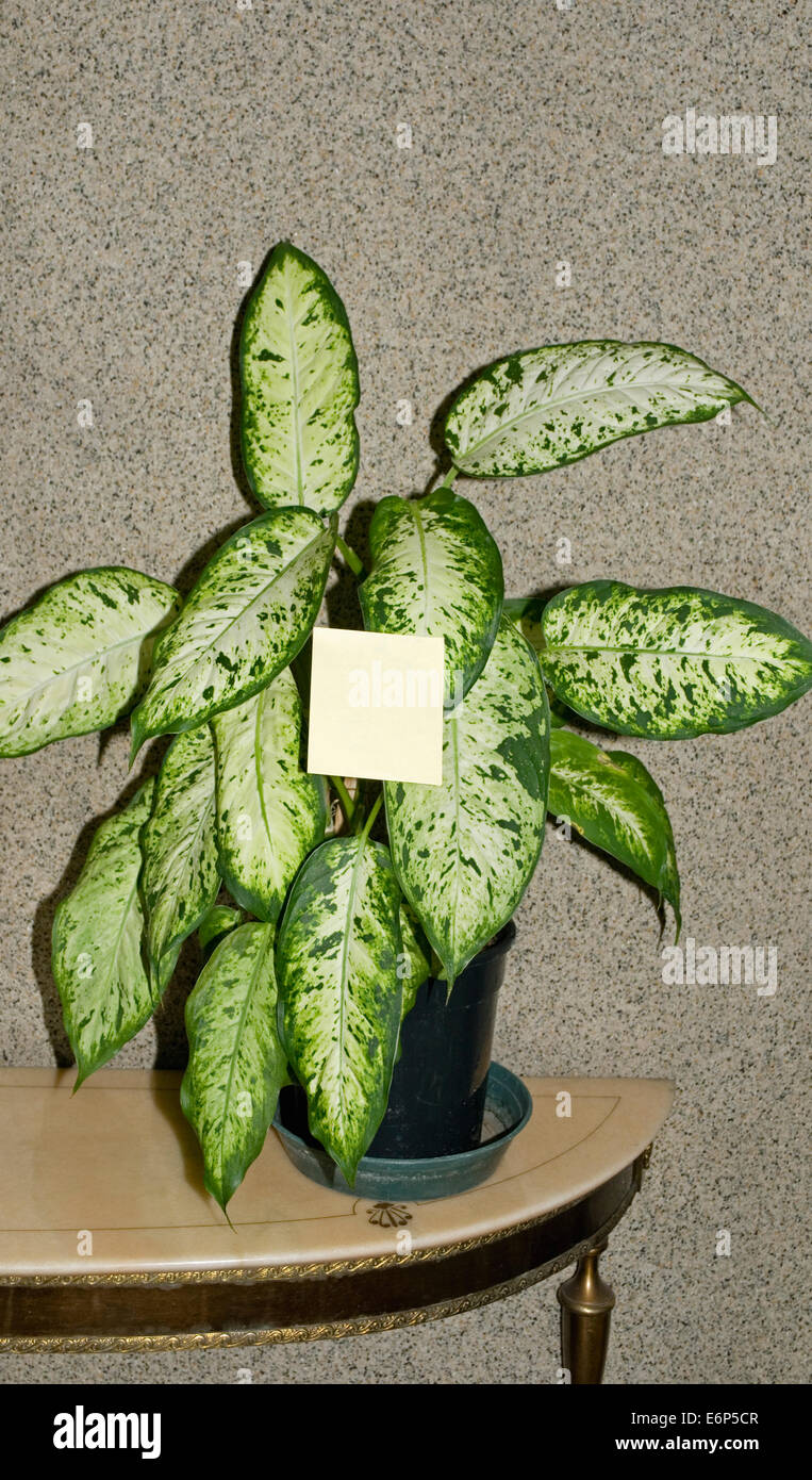 Potted plant with blank post-it note - Stock Image