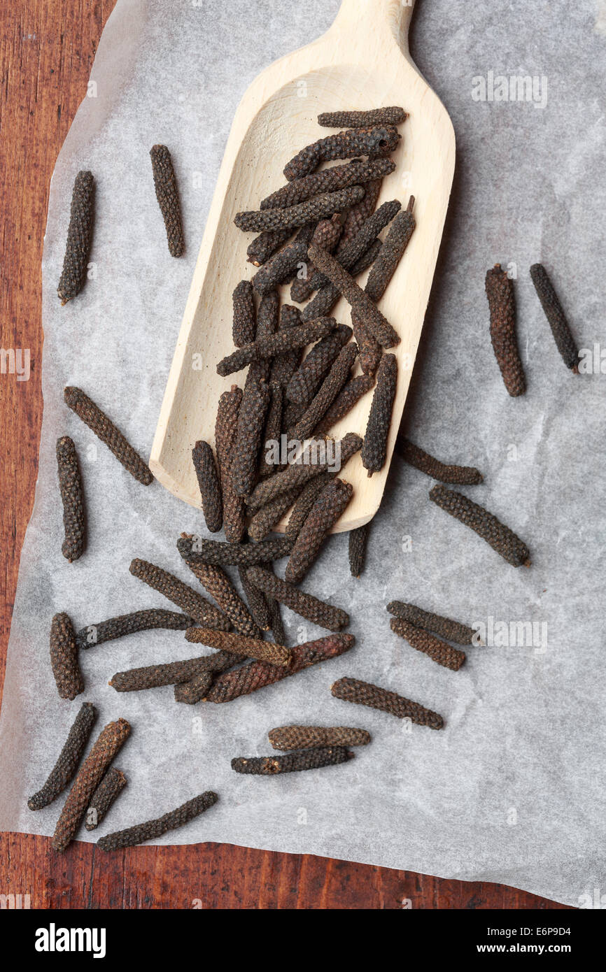 Long pepper or Javanese long pepper (Piper longum) - Stock Image