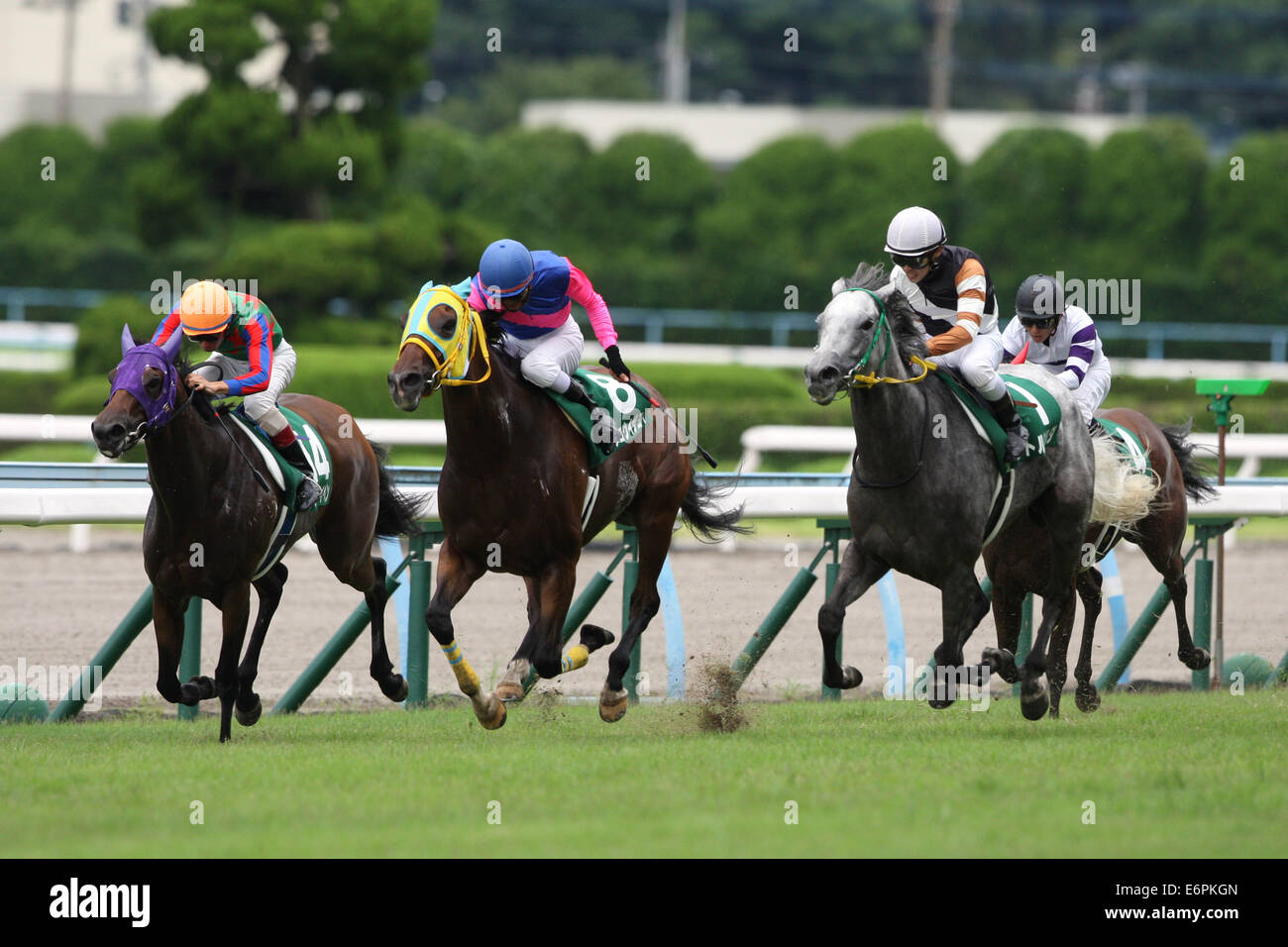 Fukuoka, Japan. 24th Aug, 2014. (L-R) Am Ball Bleiben (Ken Tanaka), Meisho Izayoi (Keisuke Dazai), Little Gerda - Stock Image