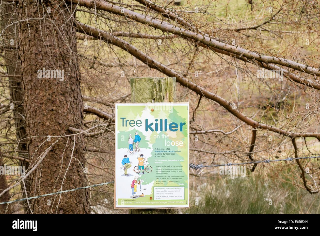 Sign warning of tree killer Phytophthora austrocedrae disease killing Juniper trees in Lake District National Park - Stock Image