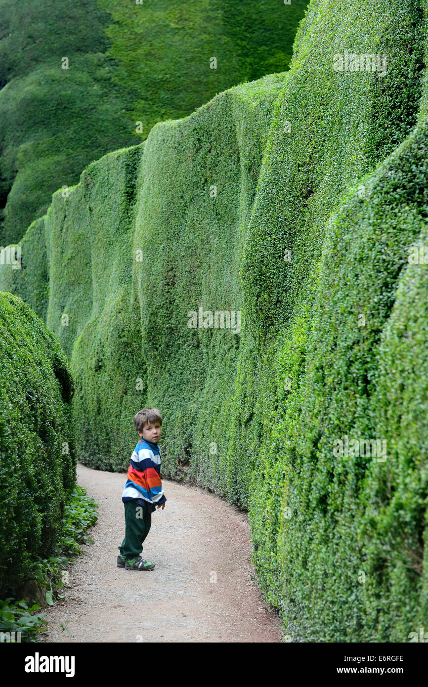 Yew hedge hedges young child boy lost alone - Stock Image