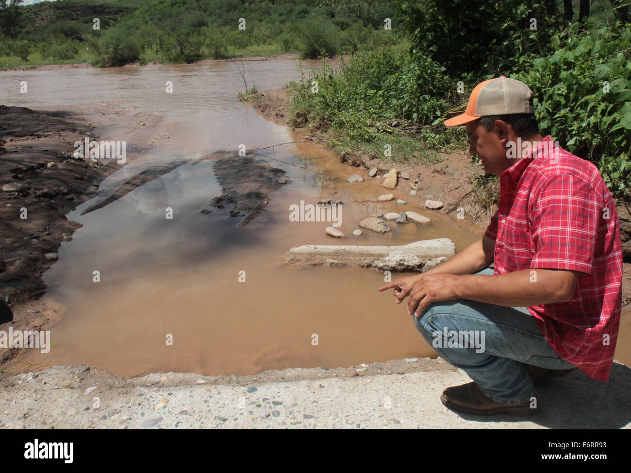 (140830) -- SONORA, Aug. 30, 2014 (Xinhua) -- Image taken on Aug. 20, 2014, shows a farmer pointing traces of toxic - Stock Image