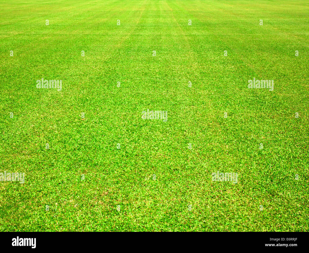 Golf green grass background texture nature leaves. - Stock Image