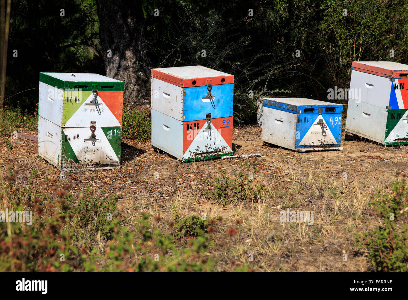 Beehives in Greece - Stock Image