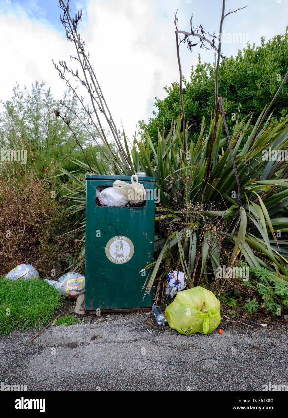 Overflowing waste bin with rubbish strewn around in a public park in Blackpool, Lancashire - Stock Image