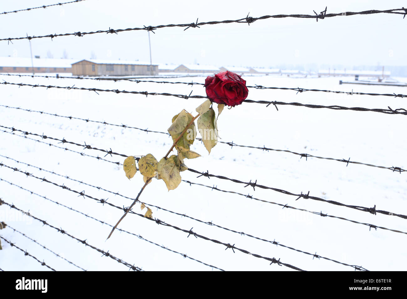 Auschwitz-Birkenau concentration and extermination camp in Winter - Stock Image