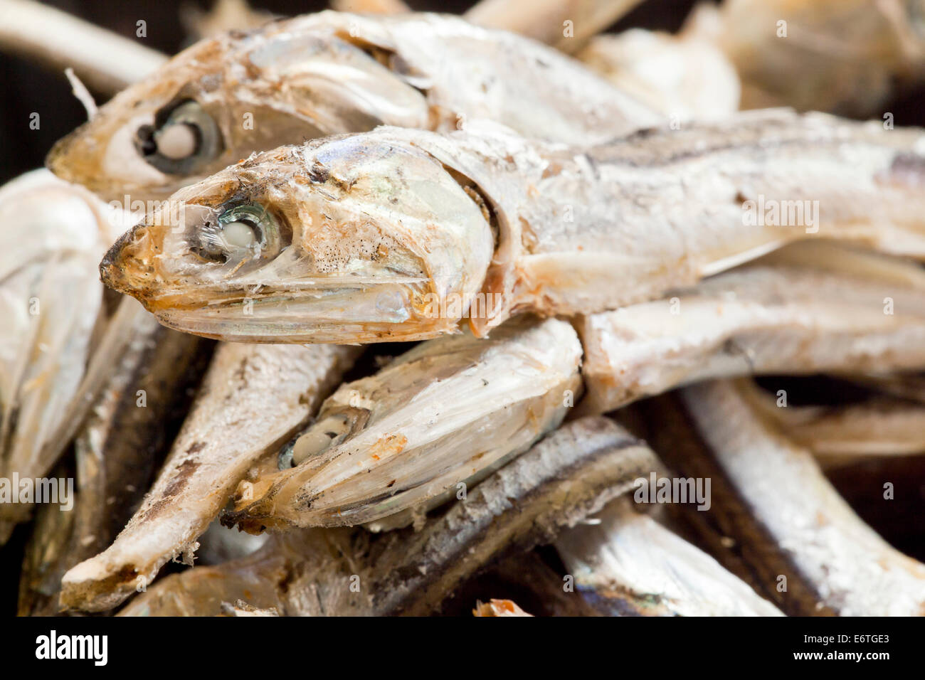 Dried Japanese anchovies (Engraulis japonicus) closeup - Stock Image