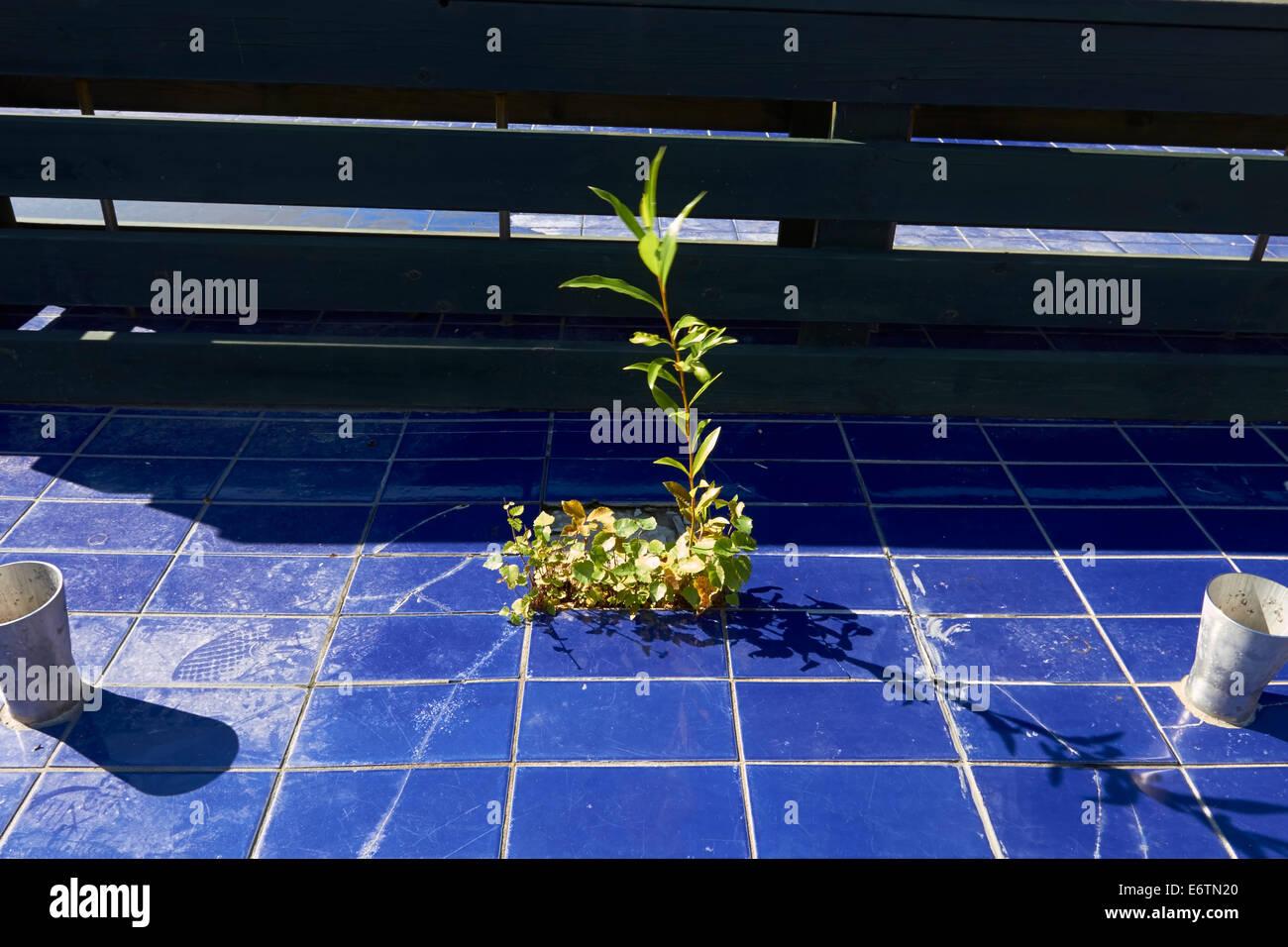 vegetation in an unused pool - Stock Image