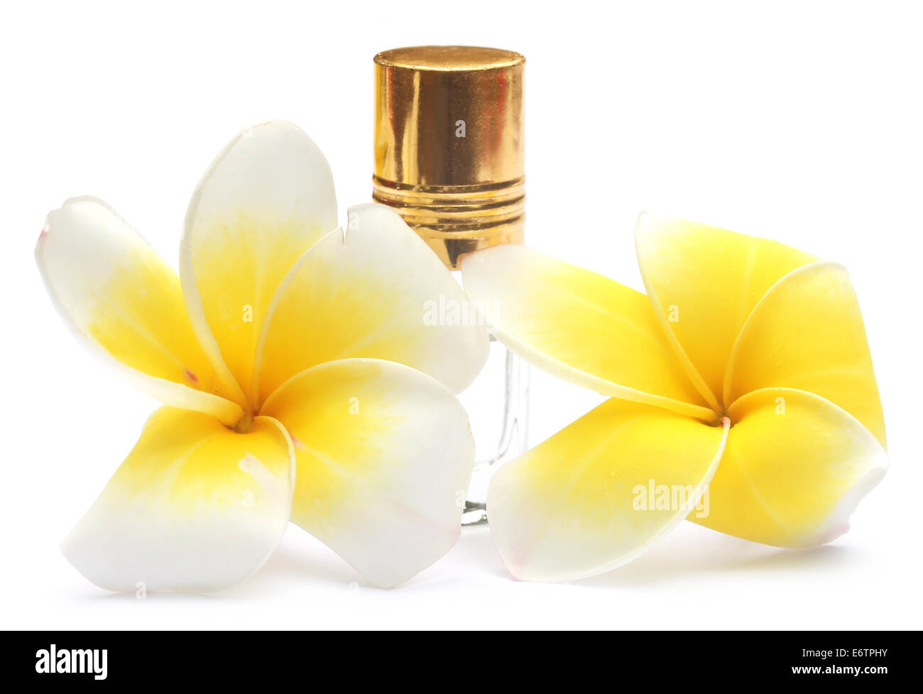 Tropical Frangipani with perfume bottle over white background - Stock Image