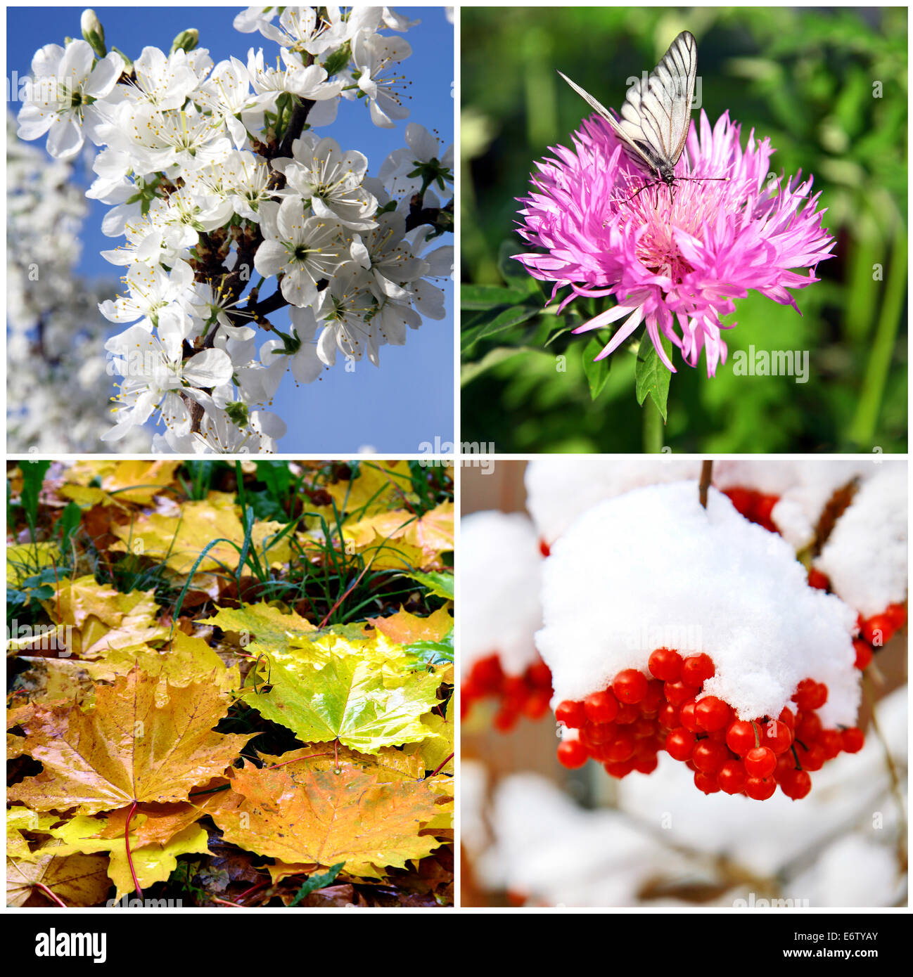 Four seasons collage - spring, summer, autumn and winter - Stock Image