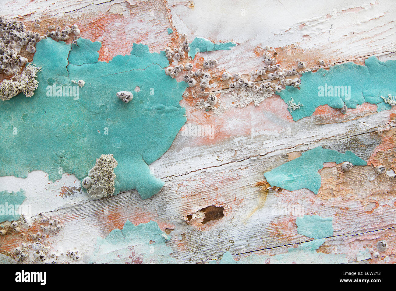 Old Wooden Shabby Chic Background With Aged Calcification Of Mussels And Fossils In Turquoise Pastel Colors
