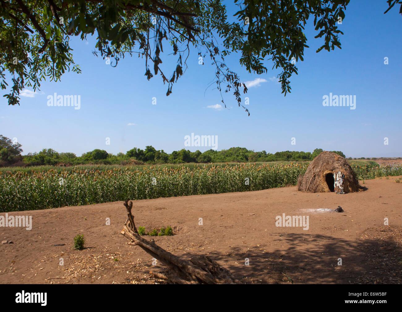 Nyangatom Tribe Farm, Kangate, Omo Valley, Ethiopia - Stock Image