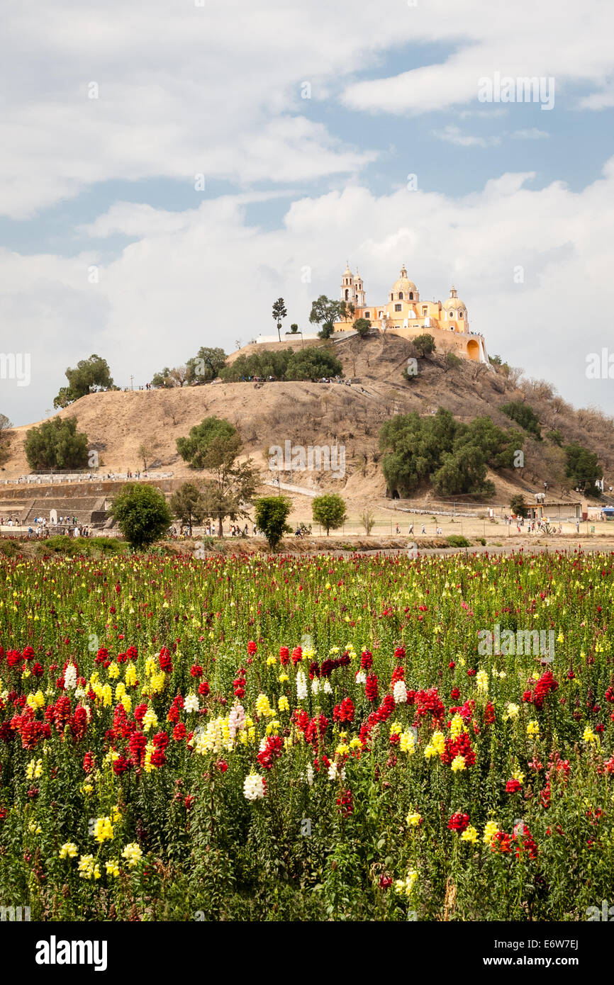 Field of flowers near the pyramid and the Remedios Temple in Cholula, Puebla, Mexico. - Stock Image