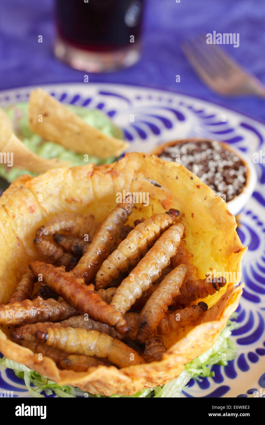 Fried maguey worms from the blue agave cactus plant used to make tequila in Puebla, Mexico. - Stock Image