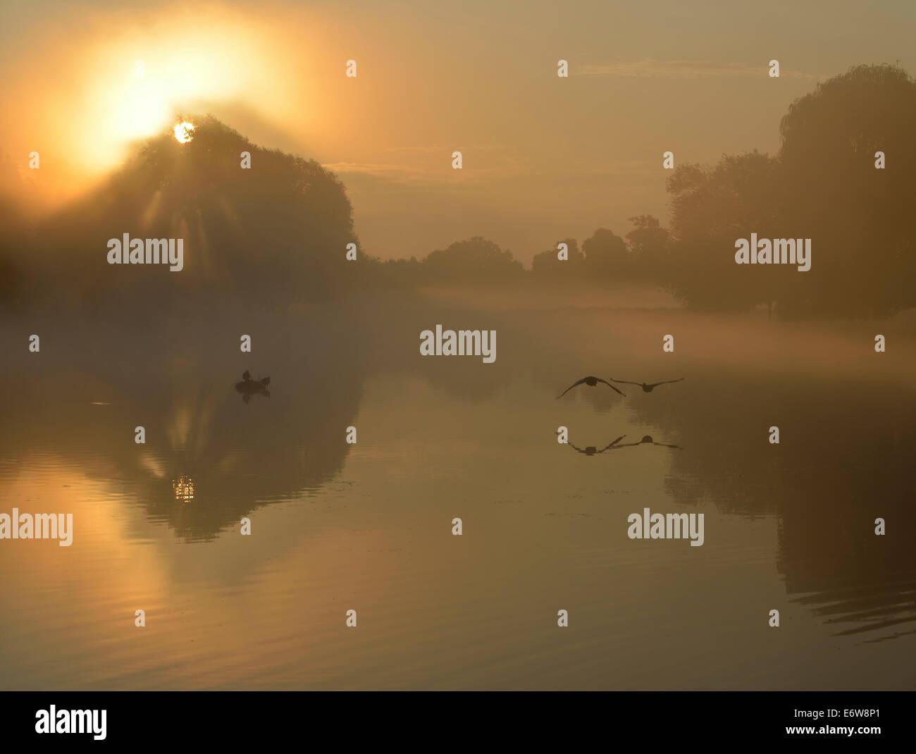 Misty sunrise over Leg of Mutton pond, Bushy Park, London, UK - Stock Image