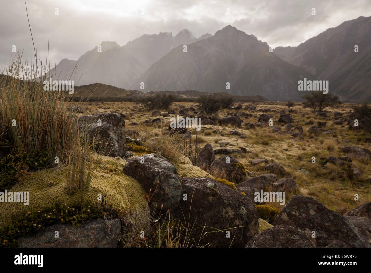 Moss And Lichens On The Terminal Moraine Of Tasman Glacier Aoraki Mount Cook