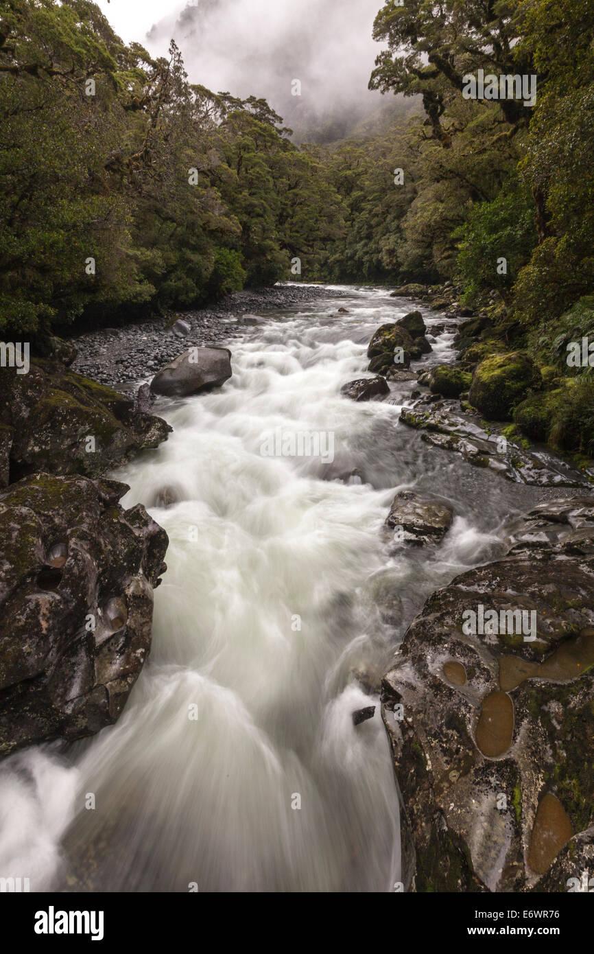 Mountain torrent, stream after rain, Milford Road, Fiordland National Park, Te Wahipounamu, South Island, New Zealand - Stock Image