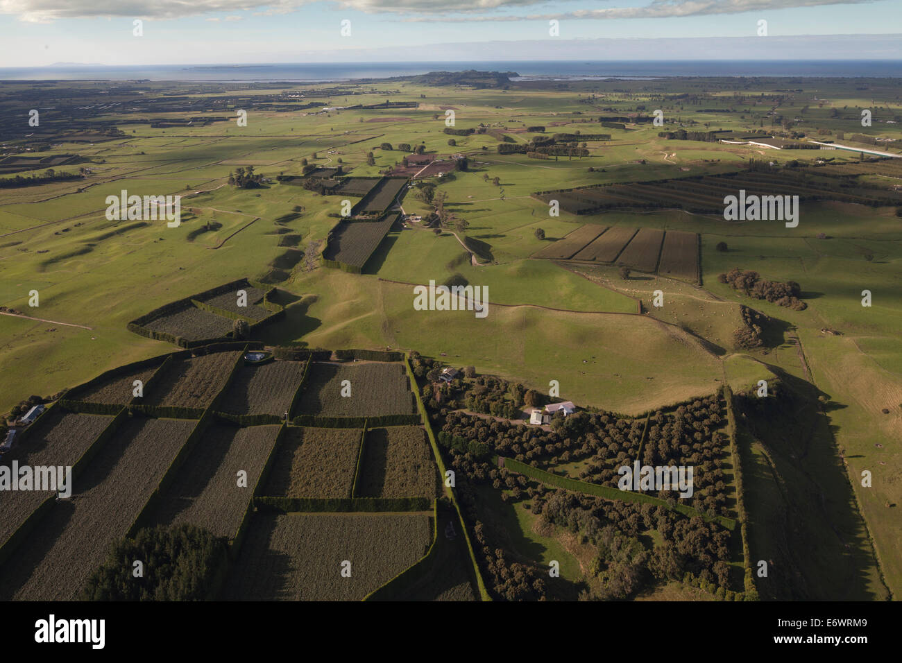 Aerial view of kiwifruit orchards, Actinidia deliciosa, Plantations with hedges as windbreakers, Bay of Plenty, - Stock Image