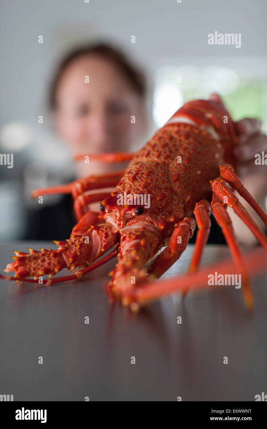 Red cooked saltwater crayfish, Kaikoura, South Island, New Zealand - Stock Image