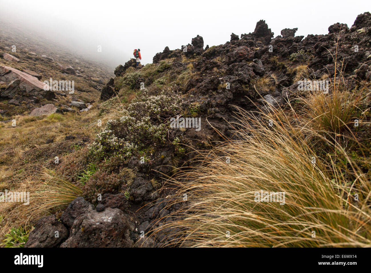 Trek through volcanic terrain, Tongariro Alpine Crossing, Great Walk, Tongariro National Park, World Heritage, North - Stock Image