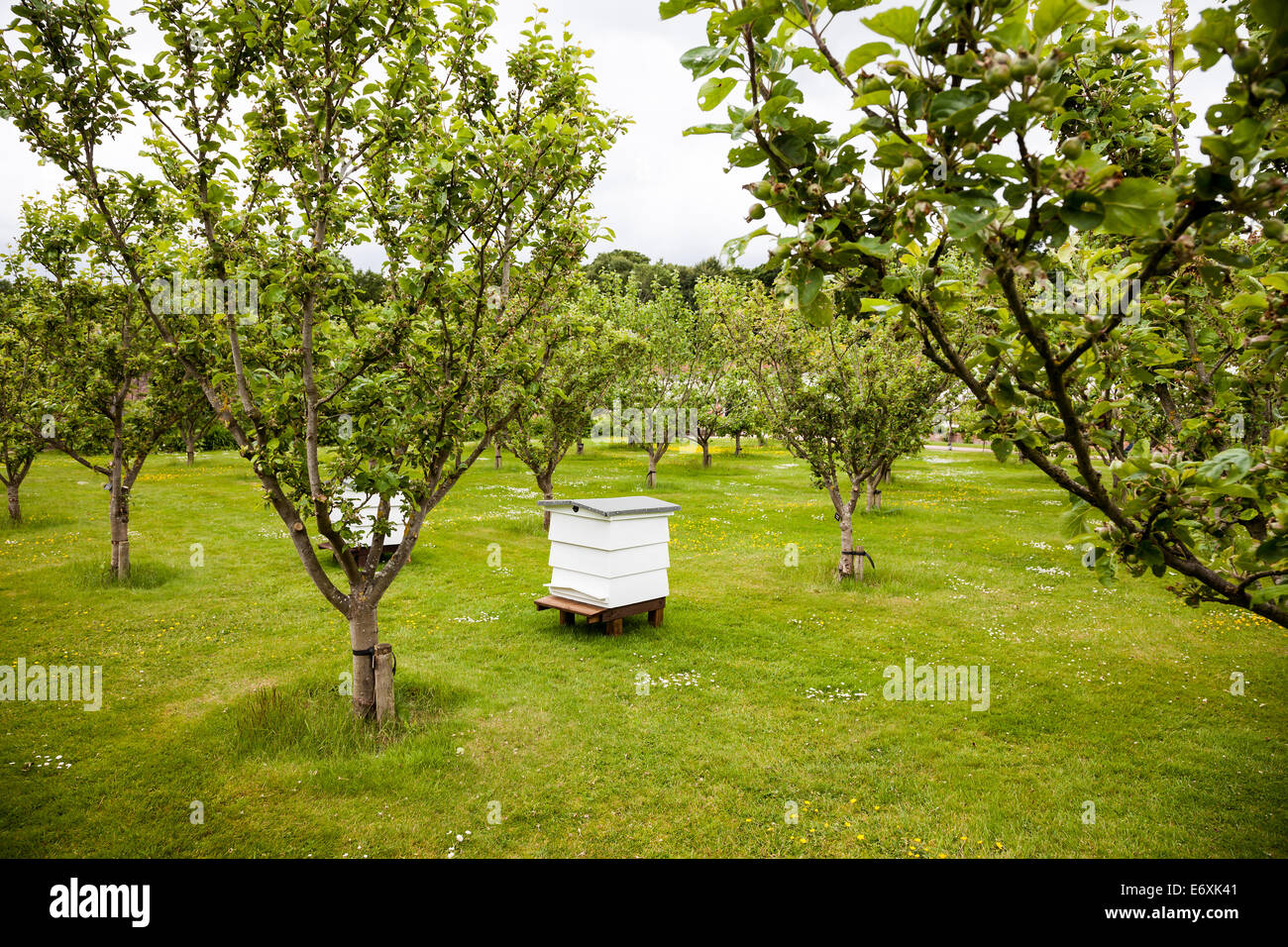 Traditional wooden Bee hives in the kitchen garden orchard at Tatton Hall, Tatton Park gardens Tatton, Cheshire, - Stock Image