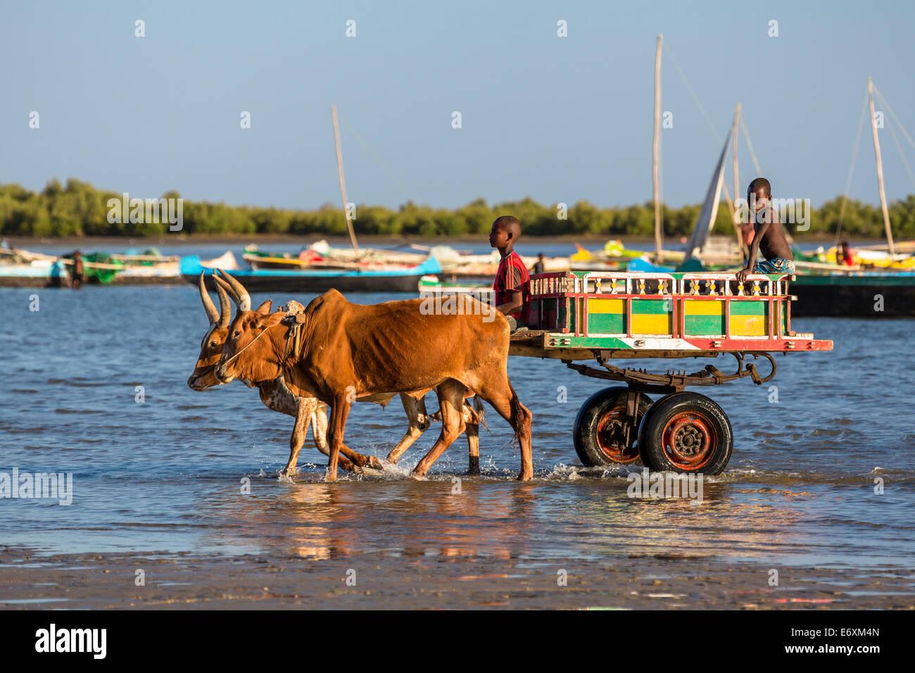 Ox cart on the beach, Tulear, Madagascar, Africa - Stock Image