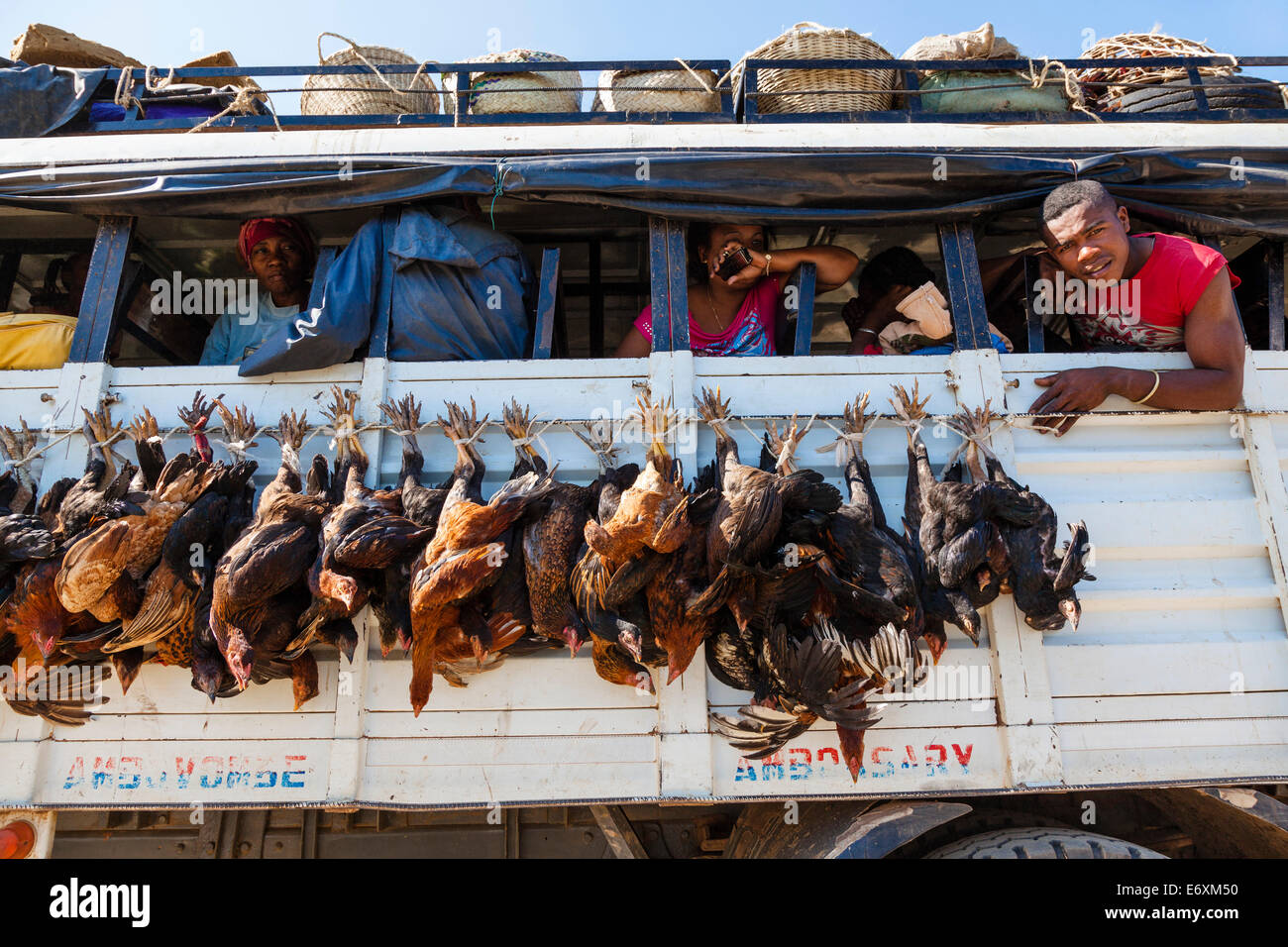 Bus transporting poultry, Tulear, South-west Madagascar, Africa - Stock Image