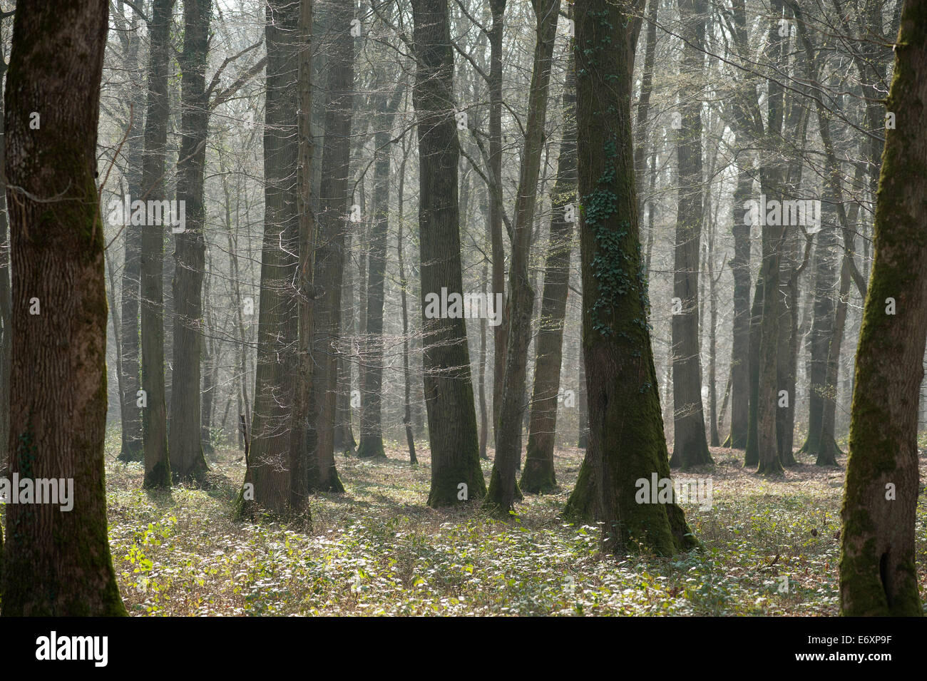 Battle of Belleau Wood WW1,north of Chateau-Thierry only 60 miles from Paris, France. March 2014 - Stock Image