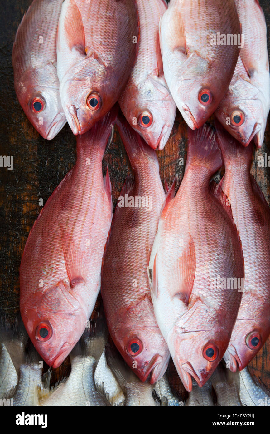 Red fish for sale at a market stand on Playa Las Hamacas beach, Acapulco, Guerrero, Mexico Stock Photo