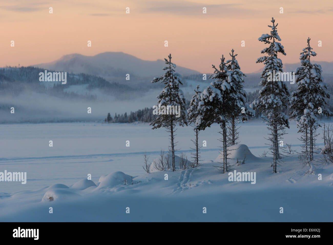 Winterlandscape in Kvikkjokk, Sweden, Lapland with mountains in background and snowy spruces - Stock Image