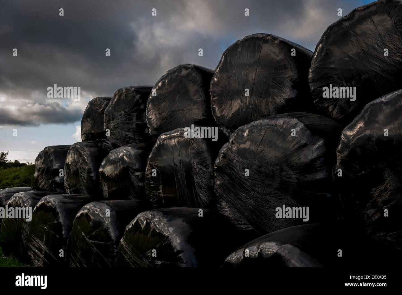 Shiny black plastic wrapped hay bails against a stormy sky - Stock Image