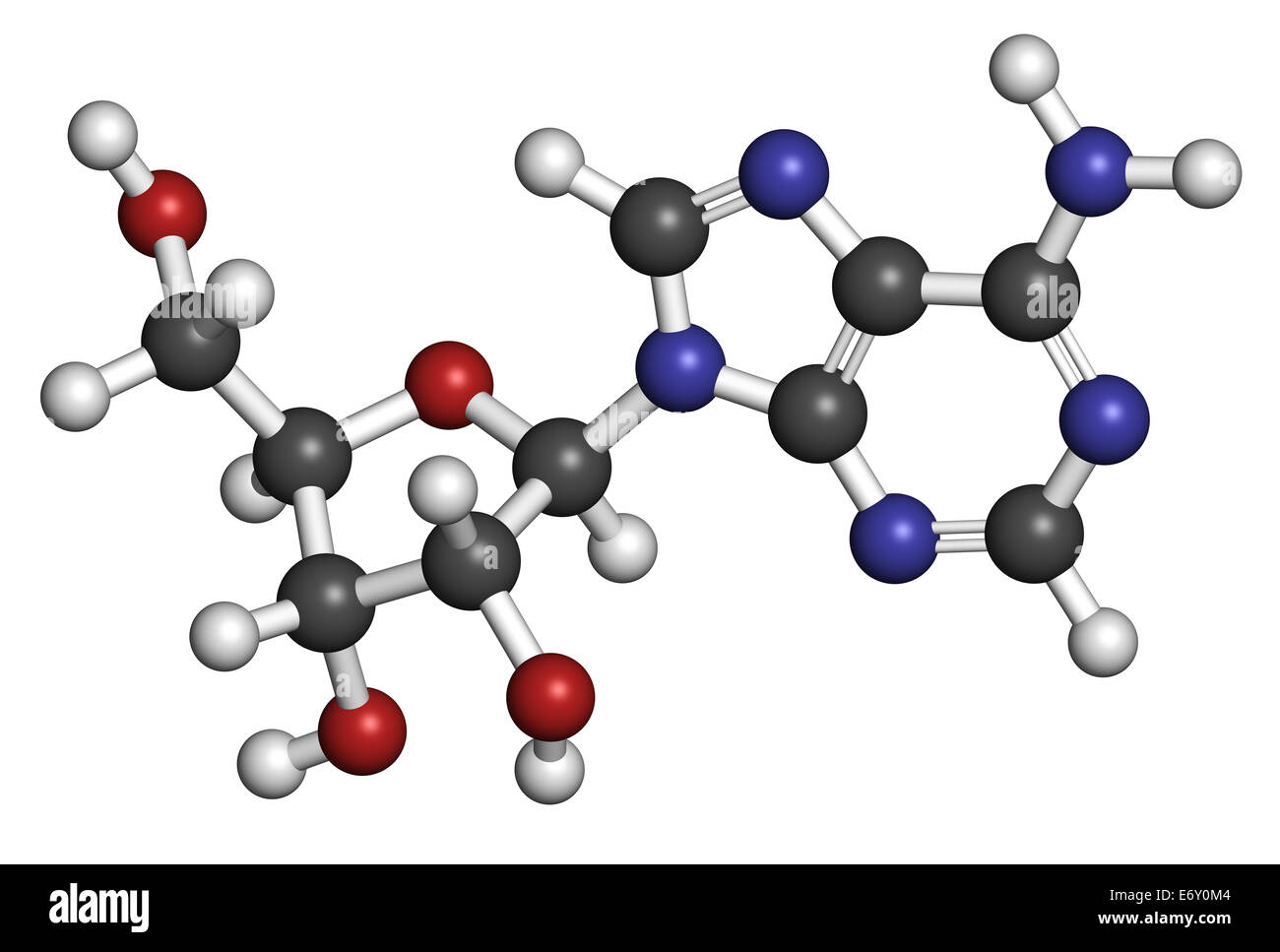 Adenosine (Ado) purine nucleoside molecule. Important component of ATP, ADP, cAMP and RNA. Also used as drug. Atoms - Stock Image