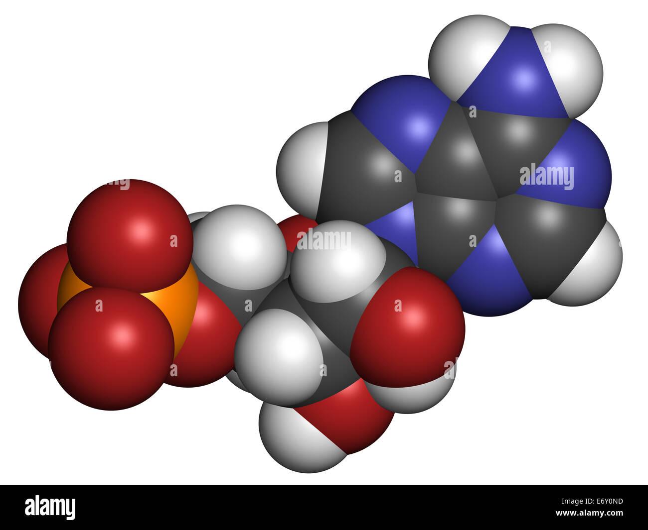 Adenosine monophosphate (AMP, adenylic acid) molecule. Nucleotide monomer of RNA. Composed of phosphate, ribose Stock Photo