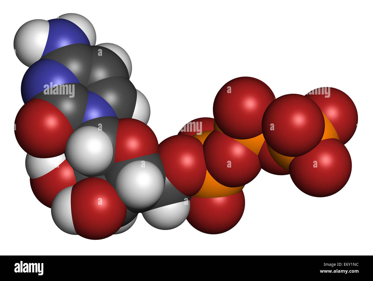 Cytidine triphosphate (CTP) RNA building block molecule. Also functions as cofactor to some enzymes. Atoms are represented Stock Photo