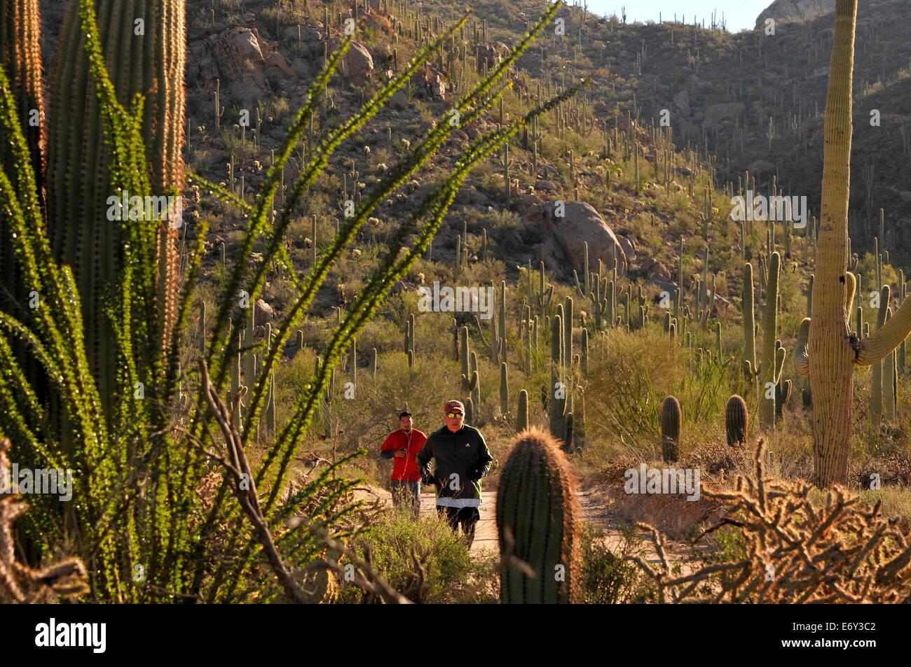 Runners and cyclists race on Bajada Loop Drive in Saguaro National Park West, Sonoran Desert, Tucson, Arizona, USA. - Stock Image