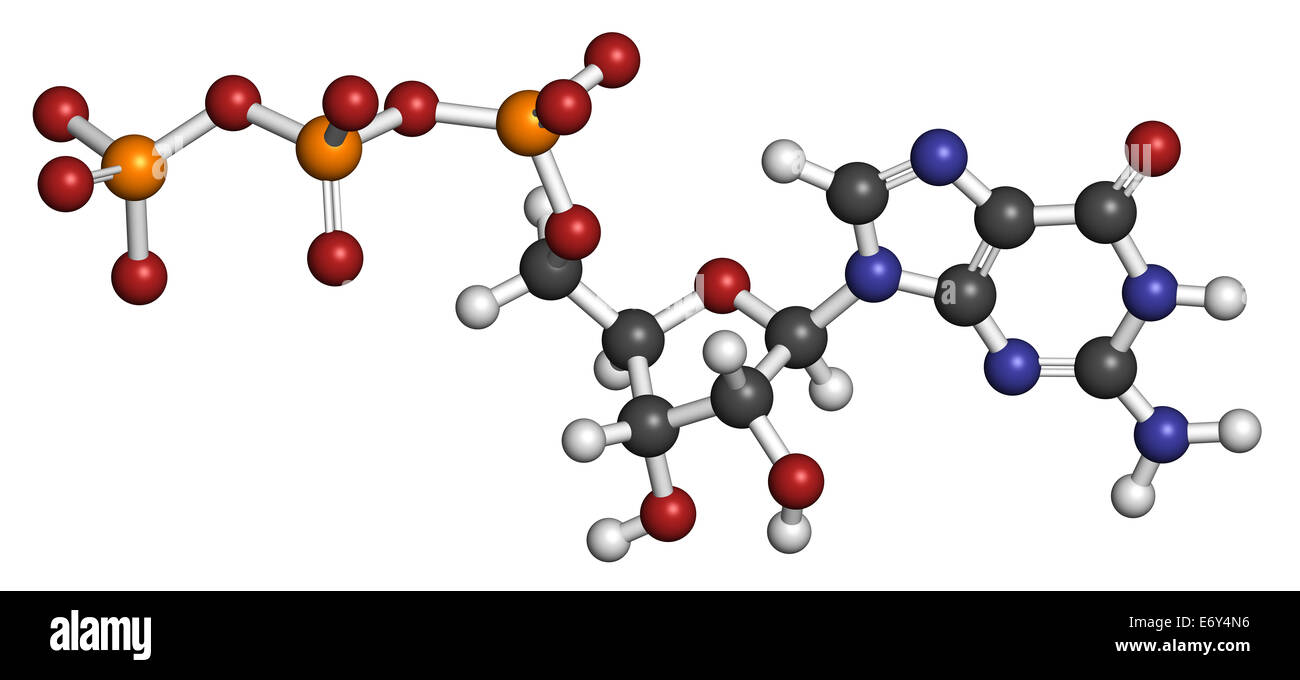 Guanosine triphosphate (GTP) RNA building block molecule. Also used as energy transport molecule and in signal transduction. - Stock Image