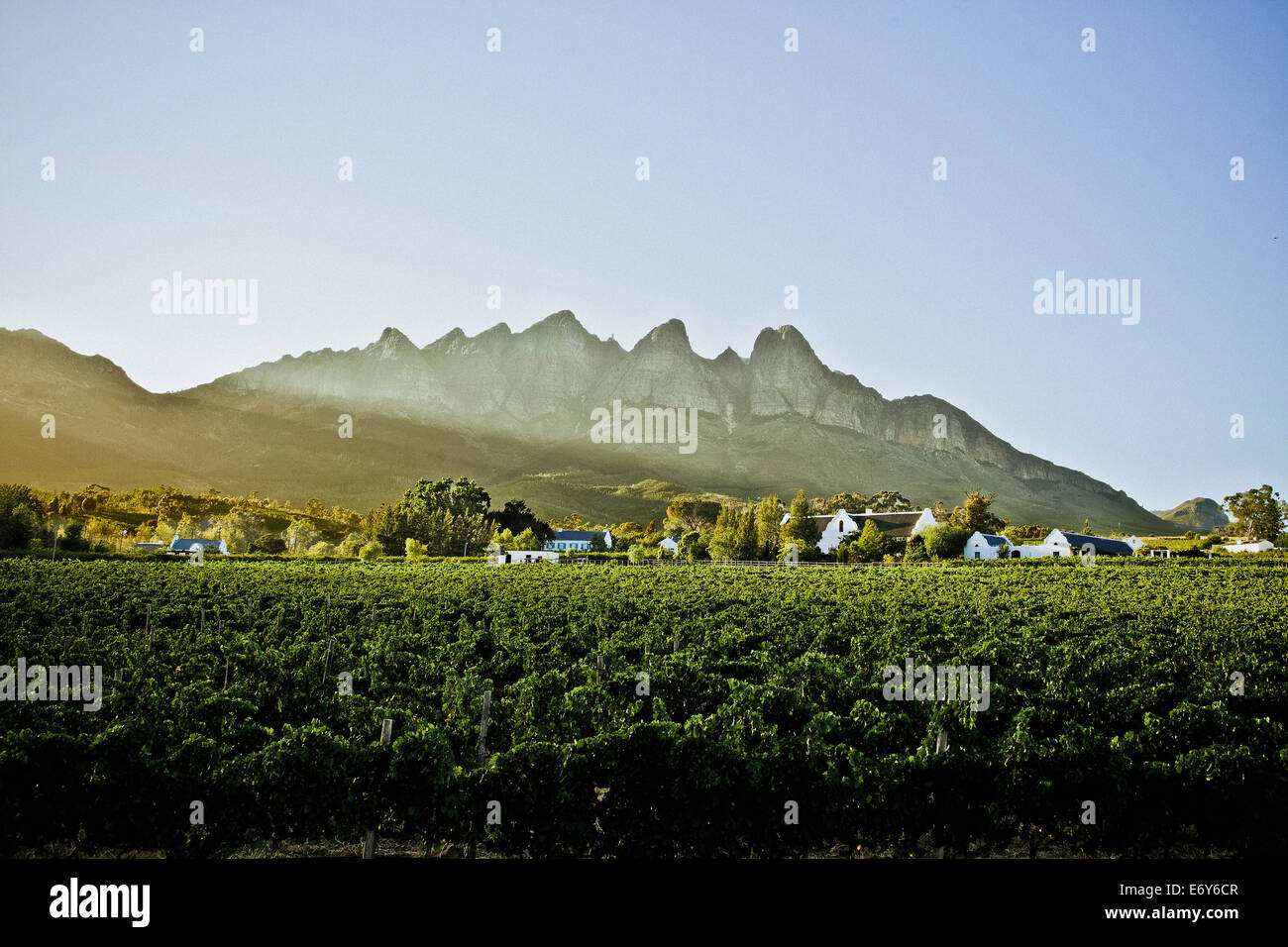 Winery in the Stellenbosch region, Western Cape, South Africa, Africa - Stock Image