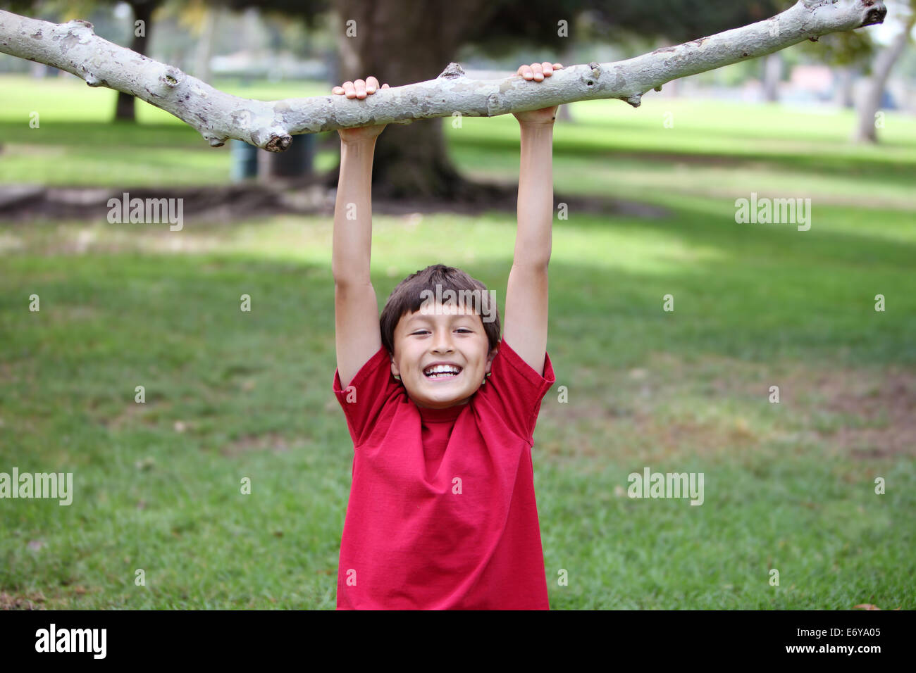 Happy young boy hanging from a tree branch at the park - Stock Image