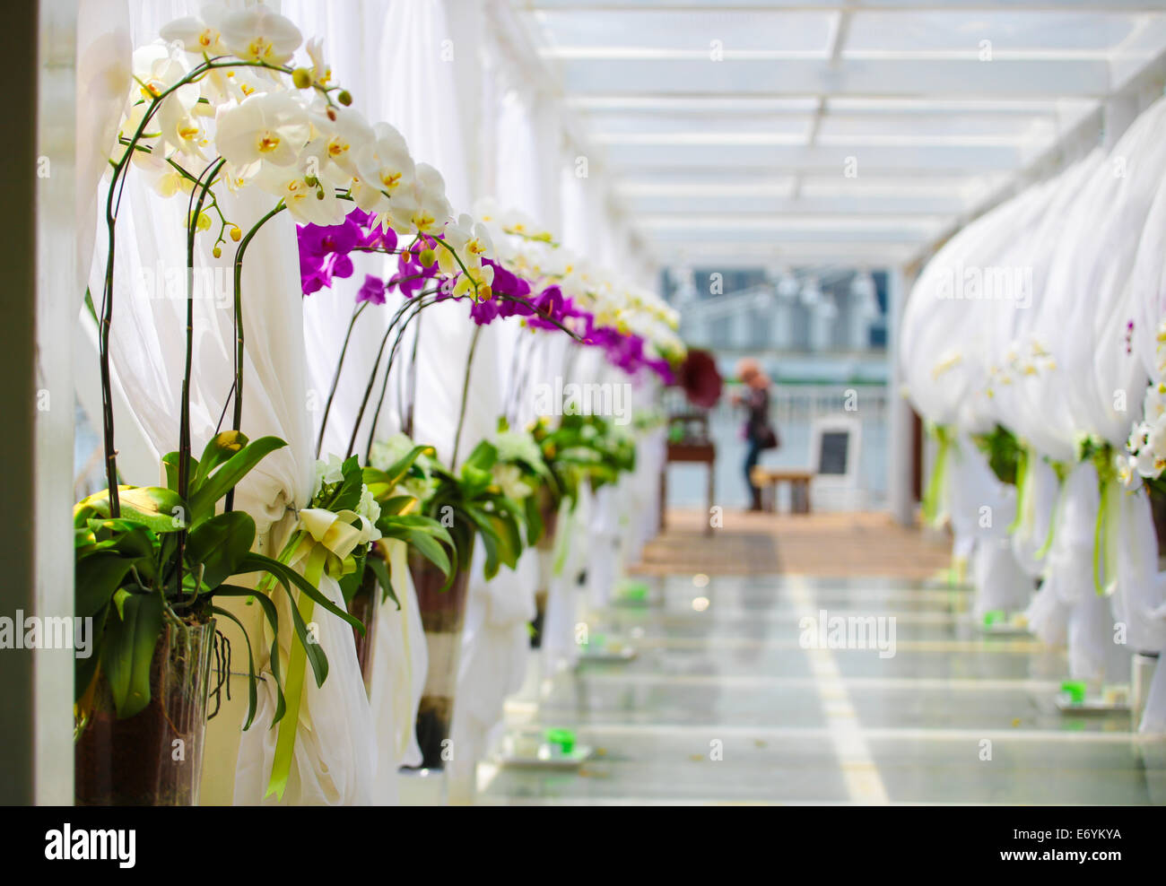 Wedding Corridor Decorated With White Clothes And Orchid Flowers