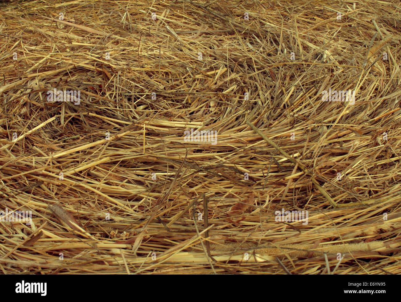 Hay Circular Texture background as an angled view of a circle bale of hay as an agriculture farm and farming symbol - Stock Image