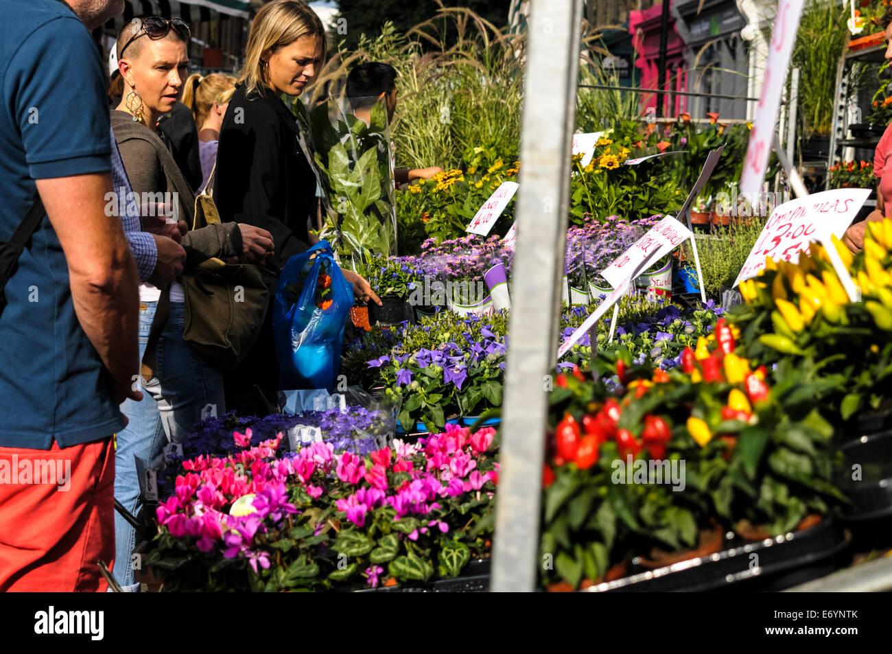 Colombia road Flower market, London, UK - Stock Image