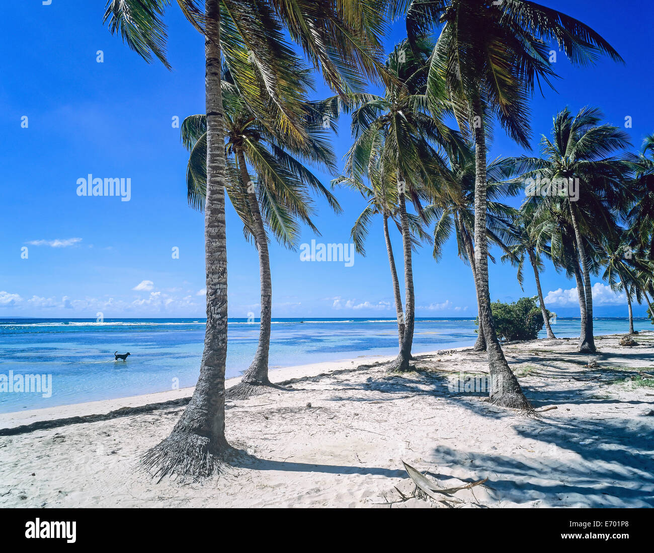 Guadeloupe Beach: Bois Jolan Beach With Palm Trees, Sainte-Anne, Guadeloupe