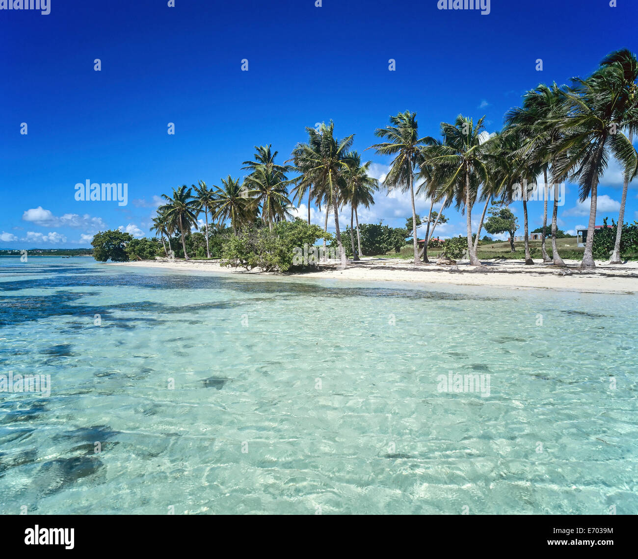 Bois Jolan Beach With Palm Trees Sainte Anne Guadeloupe French