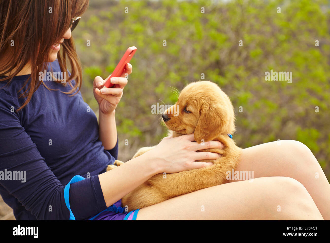 Young woman taking photograph of labrador puppy sitting on lap - Stock Image