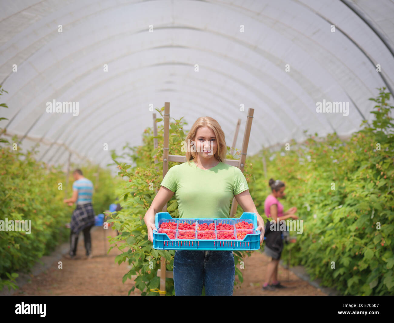 Portrait of worker with tray of raspberries on fruit farm - Stock Image