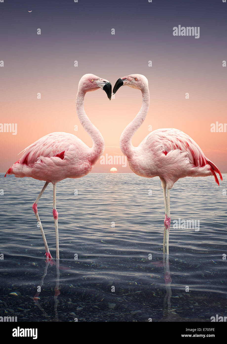 Portrait of two pink flamingoes standing face to face in sea at sunset - Stock Image