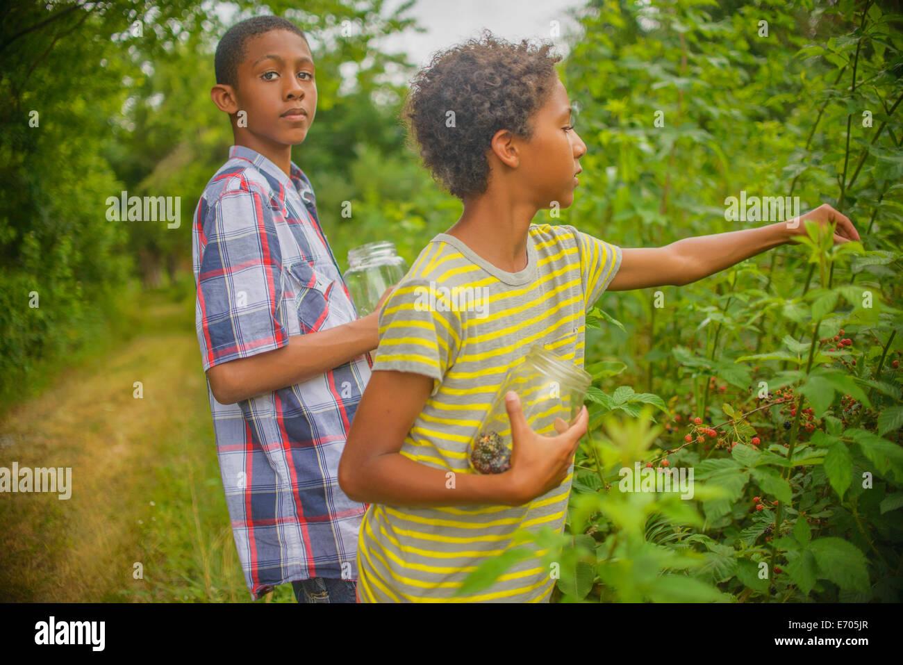 Boys picking berries - Stock Image