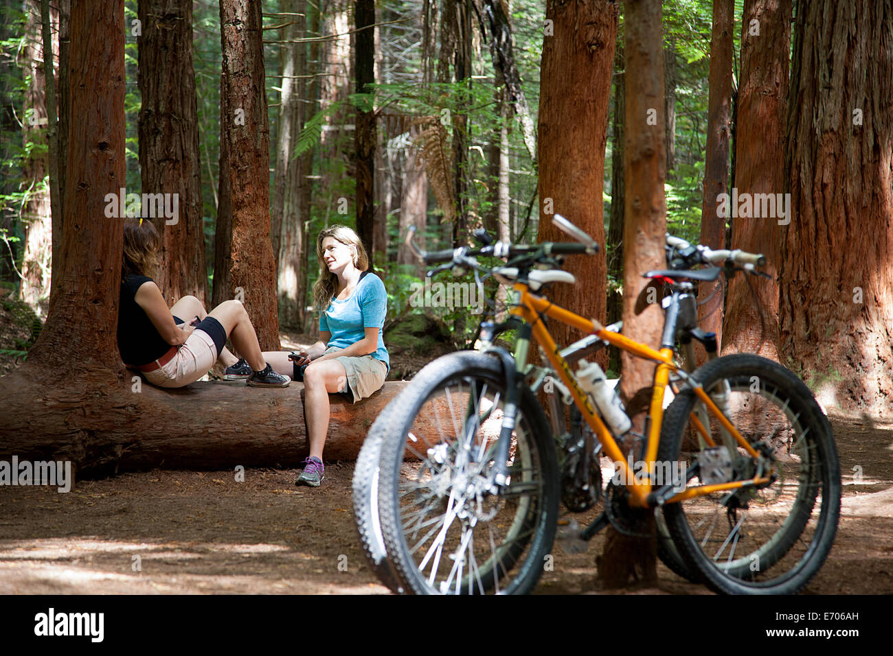 Two women mountain bikers chatting on tree trunk in forest - Stock Image