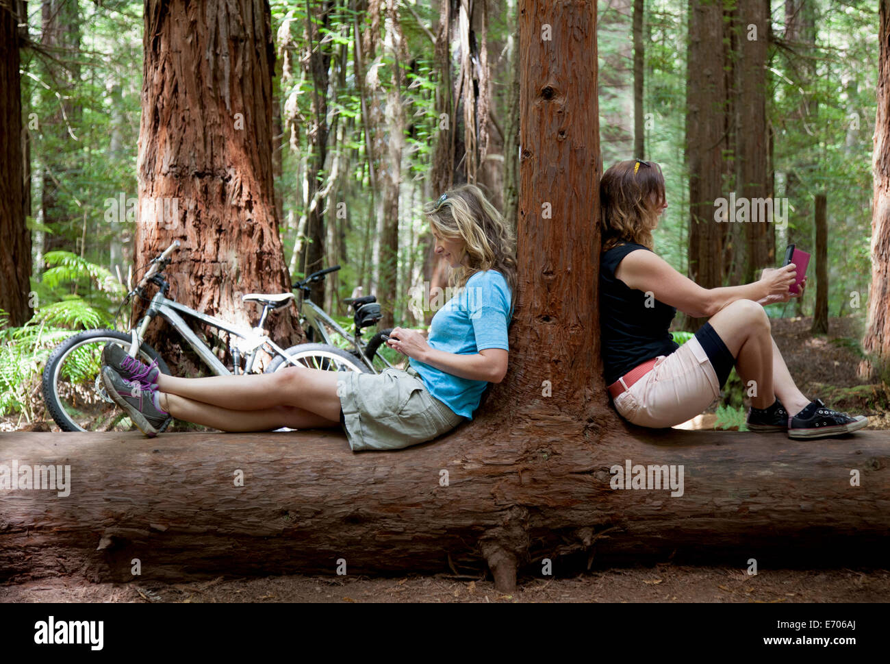 Two mid adult women looking down at smartphone and digital tablet in forest - Stock Image