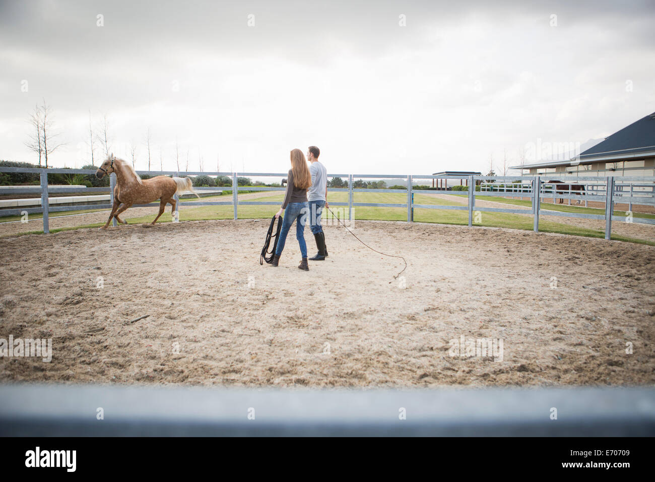 Two stablehands training palomino horse in paddock ring Stock Photo